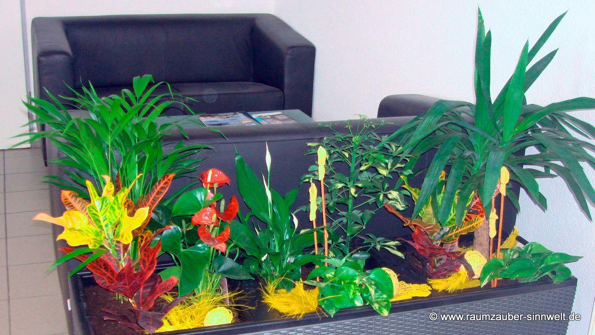 Bürobepflanzung in Pflanzgefäß von Lechuza