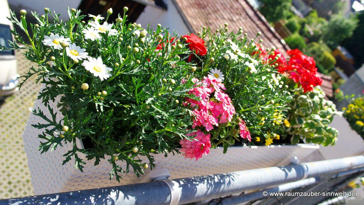 Balkonbepflanzung in Pflanzgefäß vonLechuza