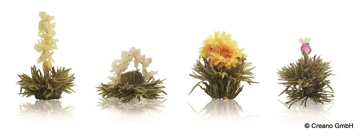 Teeblüten in vielfältigen Formen und Farben