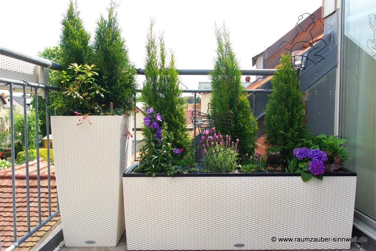 Balkonbepflanzung in Pflanzgefäß von Lechuza