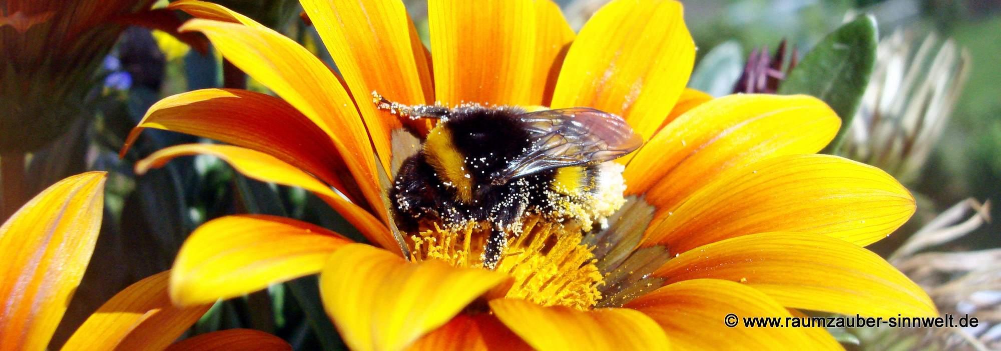 Worüber sich Bienen freuen - verwandeln Sie Garten, Terrasse oder Balkon in eine Oase für Insekten