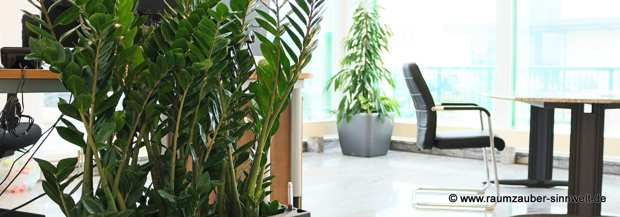 Green Office - Arbeiten im Grünen