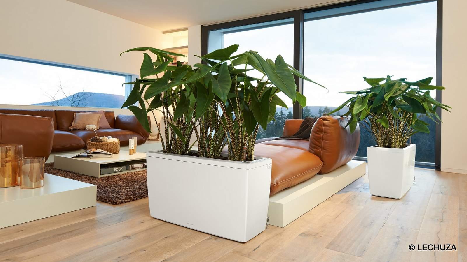 Das passende zu Hause für jede Pflanzenart: Pflanzgefäße von LECHUZA
