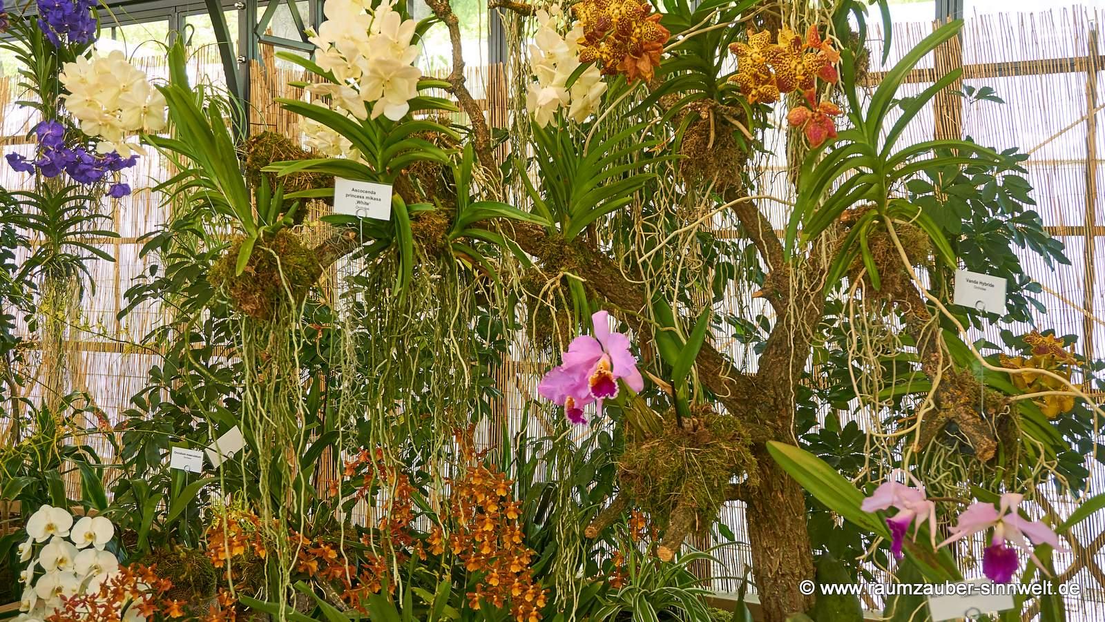 Orchideen in der Tropenhalle
