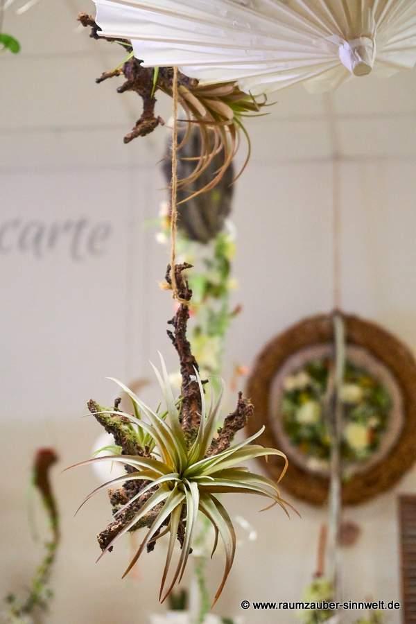 hängende Dekoration aus Tillandsien