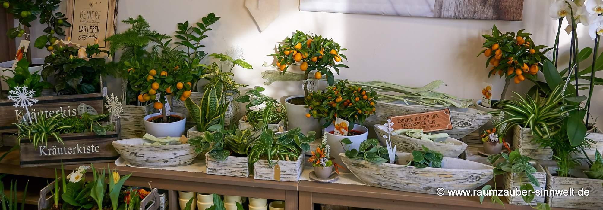 Ideen mit Pflanzen - Impulse für die florale Gestaltung von Wohnung und Büro