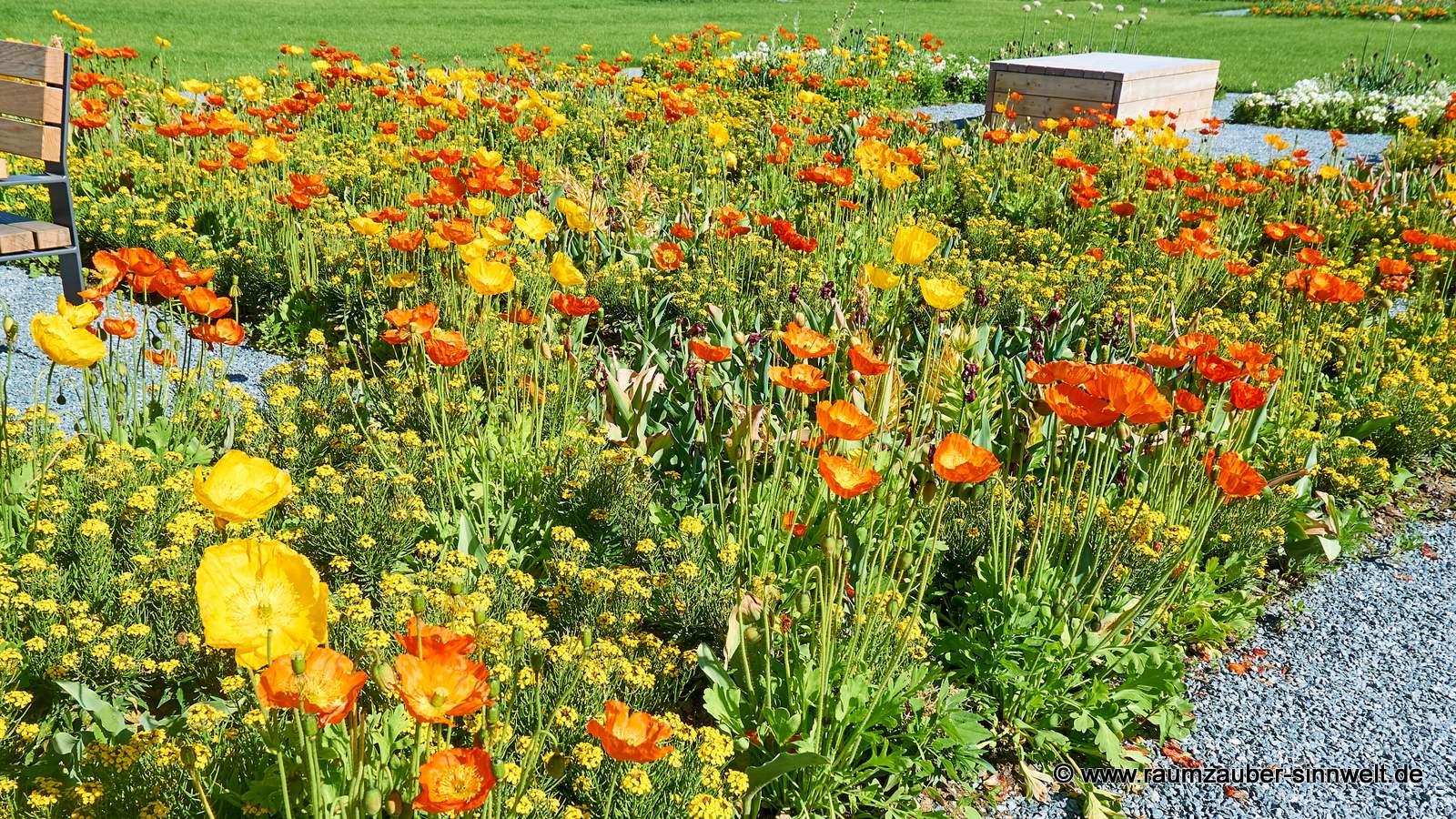 Sommerlich blühende Mohnwiese