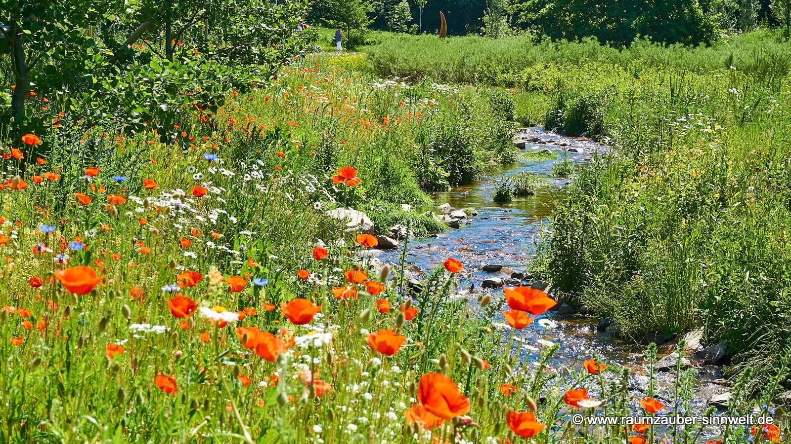 Herrliche Wildblütenwiese im Mühlbachtal - ein Paradies für Bienen und Insekten