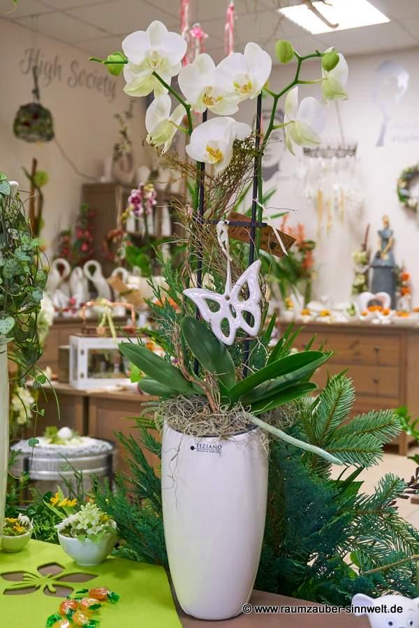 Orchidee in Vase Bergamon von TIZIANO