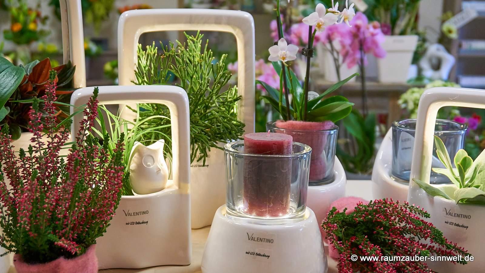 Sukkulenten und Heide in edler VALENTINO - LED-Keramik Malibu und Padula