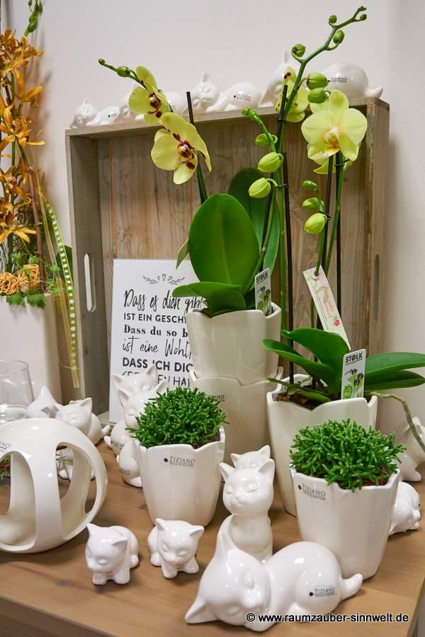 Phalaenopsis und Rhipsalis in TIZIANO-Pflanzkübel Fiore