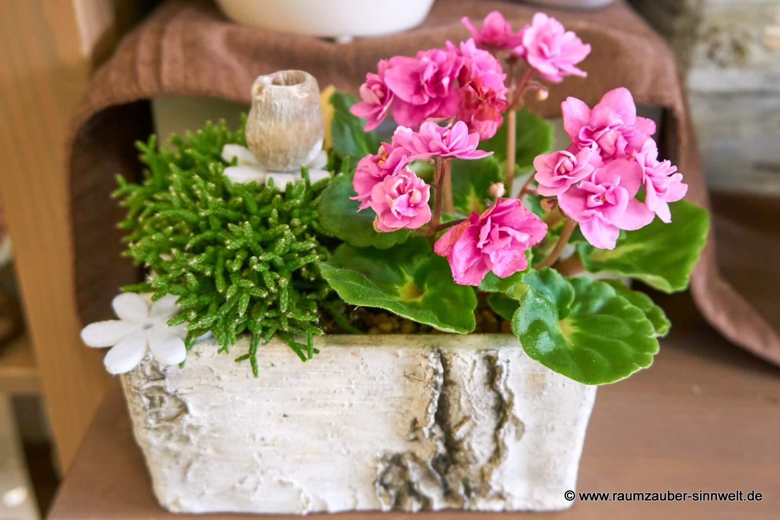 Einpflanzung in Birkenkeramik