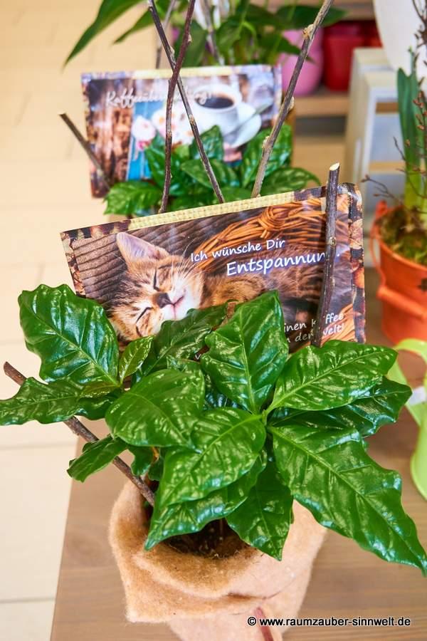 Kaffeebaum dekoriert mit Kaffeepostkarte