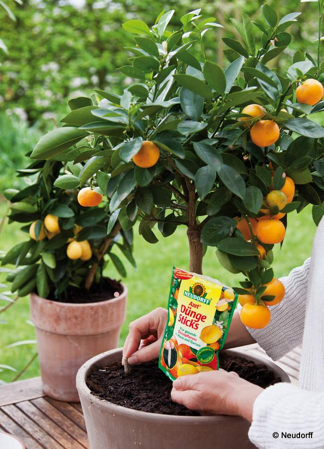 Neudorff Azet Düngesticks für Zitruspflanzen