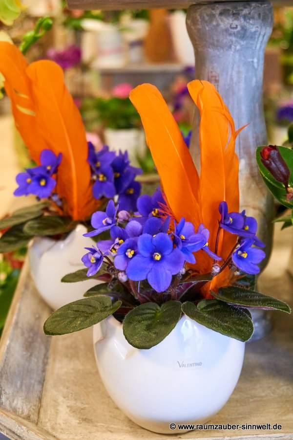 Usambara-Veilchen in VALENTINO-Kübel dekoriert
